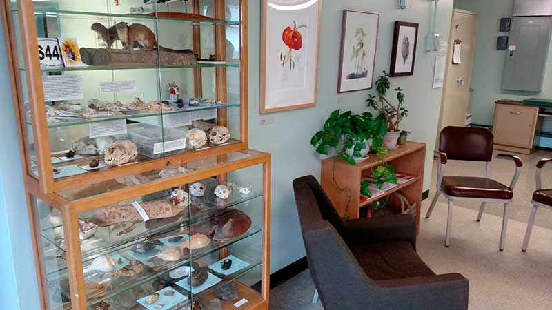 Display case of natural history objects in the lobby